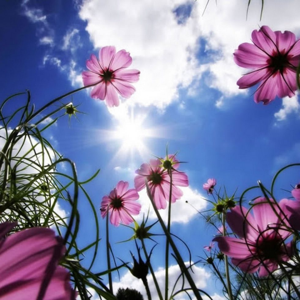 Spectacular-backgrounds-for-tablets-112-2