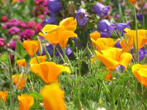 Colorful-Flowers-Picture-Small-and-Colored-Flowers-in-Bloom-Amazing-Look