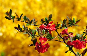 colorful-flowers-desktop-wallpapers